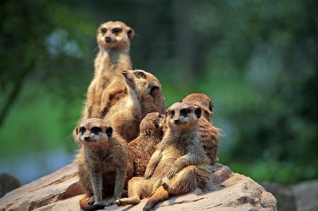 meerkat meals and movies saves you money